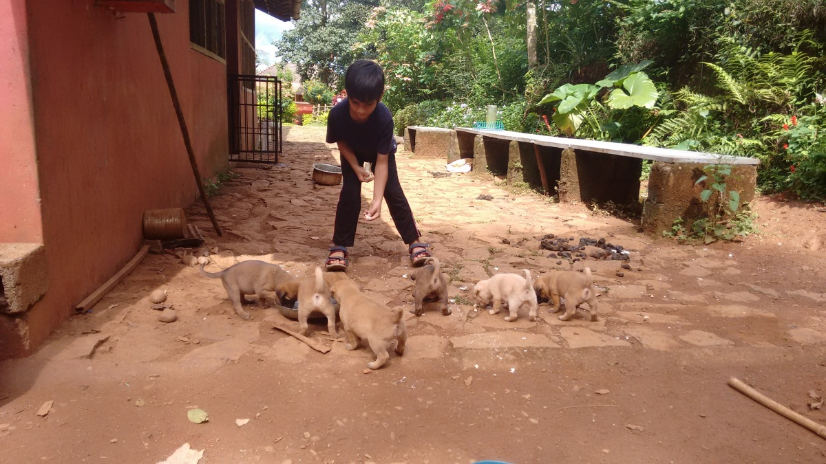 feeding puppies