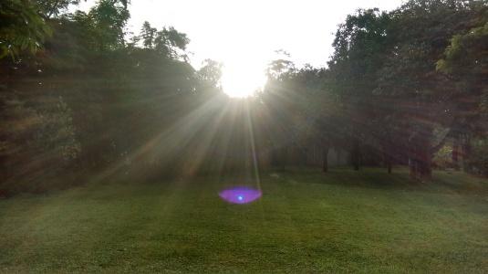 grass in sun 2.jpg