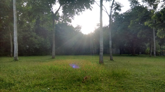 grass-in-sun