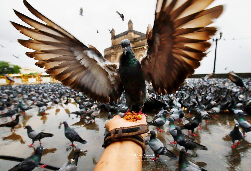 Seema Pigeon